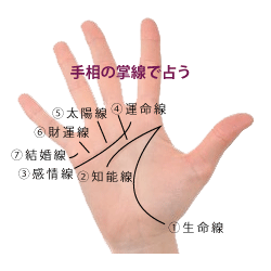 手相の見方 基本の七大線の画像