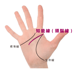 手相の頭脳線・知能線