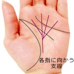 運命線から各指に向かう支線がある手相(最強の覇王線)