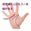 感情線の上にもう1本別の線がある手相‐その1(二重感情線・副感情線)