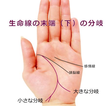 生命線の支線・分岐(二股・三又・枝分かれ)している手相