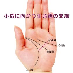 小指に向かう生命線の支線 努力線