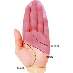 頭脳線を境にして掌の面積で占う