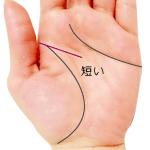 手のひらの途中で終わる短い頭脳線
